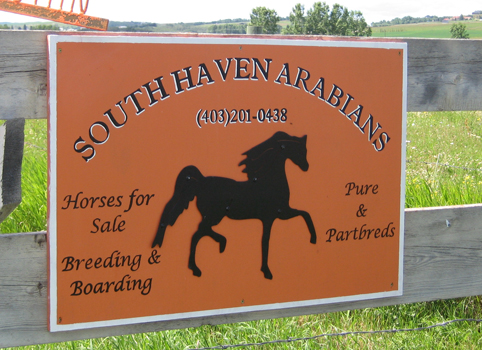 South Haven Arabians